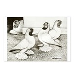 Moorhead Tumbler Pigeons Postcards (Package of 8)