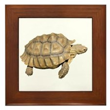 Tortoise Framed Tile