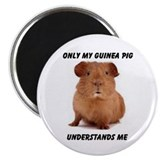 GUINEA PIG 2.25&quot; Magnet (10 pack)