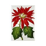Botanical Poinsettia Rectangle Magnet