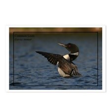 Common Loon Postcards (Package of 8)