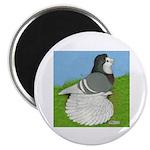 Opal Trumpeter Pigeon Magnet