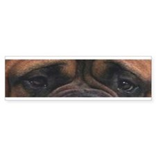Eyes of a Mastiff Bumper Bumper Sticker