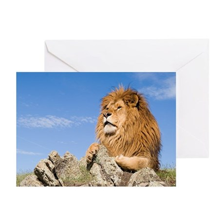 African Lion Greeting Cards (Pk of 10)