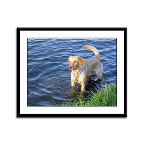 Yellow Lab Madison Framed Panel Print