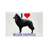 belgian Rectangle Magnet (10 pack)