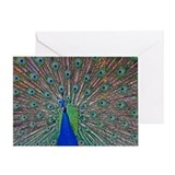 Peacock 1512 Greeting Card