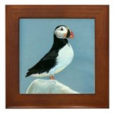 Atlantic Puffin Framed Tile