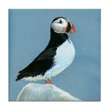 Atlantic Puffin Tile Coaster