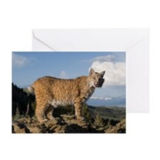 Bobcat Greeting Cards (Pk of 10)