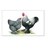 Dark Brahma Chickens Rectangle Sticker