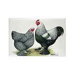 Dark Brahma Chickens Rectangle Magnet (10 pack)