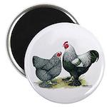 Dark Brahma Chickens Magnet