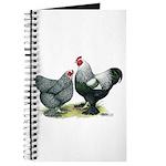 Dark Brahma Chickens Journal