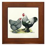 Dark Brahma Chickens Framed Tile