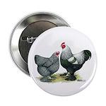 Dark Brahma Chickens Button