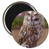 Winking Owl Magnet