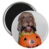 Trick or Treat WHV Magnet