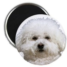 "Fifi the Bichon Frise 2.25"" Magnet (10 pack)"