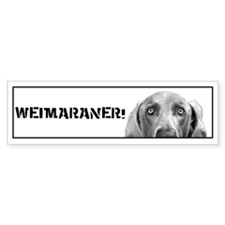 Weimaraner In A Box! Bumper Car Sticker