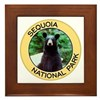 Sequoia NP (Black Bear) Framed Tile