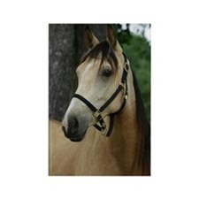 Andalusian filly profile Rectangle Magnet