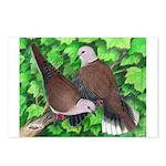 Ringneck Doves Postcards (Package of 8)