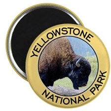 "Yellowstone NP (Bison) 2.25"" Magnet (100 pack)"