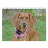 Cute Redbone coonhound Wall Calendar