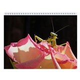 Preying mantis Wall Calendar