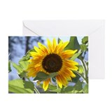 Cool To bee Greeting Card