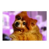Cute Pomeranian Postcards (Package of 8)