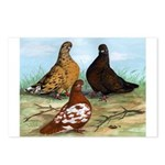 Shortfaced Tumbler Pigeons Postcards (Package of 8
