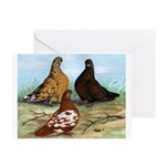 Shortfaced Tumbler Pigeons Greeting Card