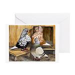 Domestic Flight Pigeons Greeting Cards (Pk of 10)