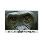 Lola ya bonobo Rectangle Magnet (100 pack)