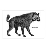 Spotted Hyena Postcards (Package of 8)