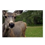 INQUISITIVE DEER - Postcards (Package of 8)