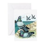 Rock Doves Greeting Cards (Pk of 10)