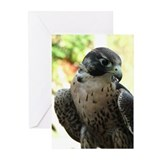 Speed Demon Greeting Cards (Pk of 10)