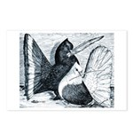 Indian Fantail Pigeons Postcards (Package of 8)