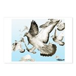Flying Homer Pigeons Postcards (Package of 8)