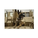 Militant Belgian Malinois! Rectangle Magnet