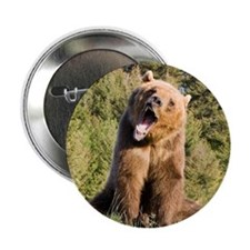 "Grizzly Bear 2.25"" Button (100 pack)"
