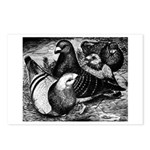 Giant Homer Pigeons Postcards (Package of 8)