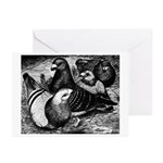 Giant Homer Pigeons Greeting Cards (Pk of 10)