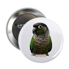 Green-Cheeked Conure - Button