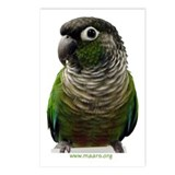 Green-Cheek Conure Postcards (8)