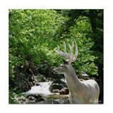 Buck by Rocky Waterfall Tile Coaster