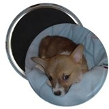 Welsh Corgi &quot;Too cute corgi &quot; Magnet